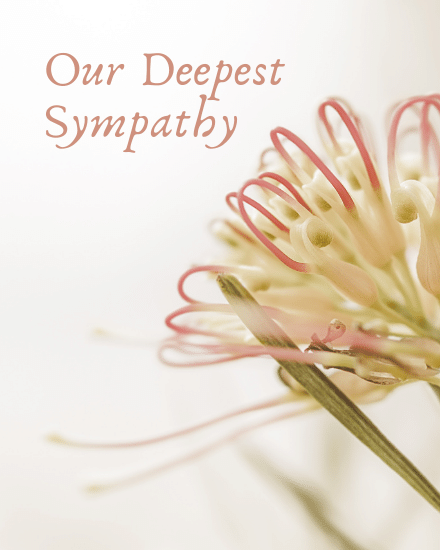 create free our deepest sympathy group card